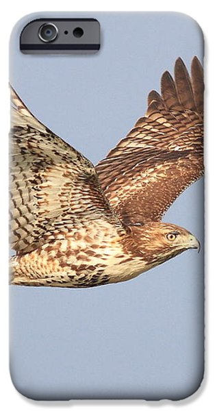 Red Tailed Hawk 20100101-1 iPhone Case by Wingsdomain Art and Photography