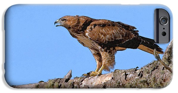 Red Tail Hawk Digital Art iPhone Cases - Red-tailed Hawk iPhone Case by Betty LaRue