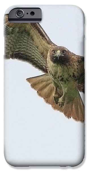 Red Tailed Hawk Finds Its Prey iPhone Case by Wingsdomain Art and Photography