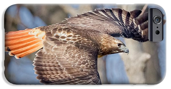 Redtail Hawk iPhone Cases - Red Tailed Hawk Flying iPhone Case by Bill Wakeley