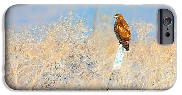Buy iPhone Cases - Red-tailed Hawk - Lower Klamath Tule Lake California iPhone Case by Ram Vasudev