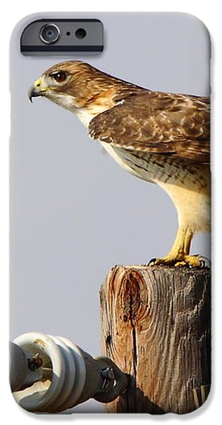 Red Tailed Hawk Perched iPhone Case by Robert Frederick