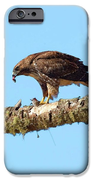 Red Tail Hawk Digital Art iPhone Cases - Red-tailed Hawk with Prey iPhone Case by Betty LaRue