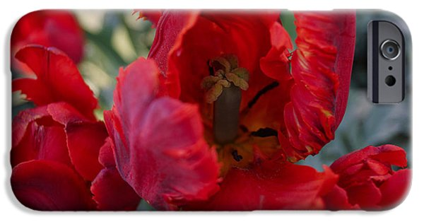 Norway iPhone Cases - Red Tulips iPhone Case by Lana Art