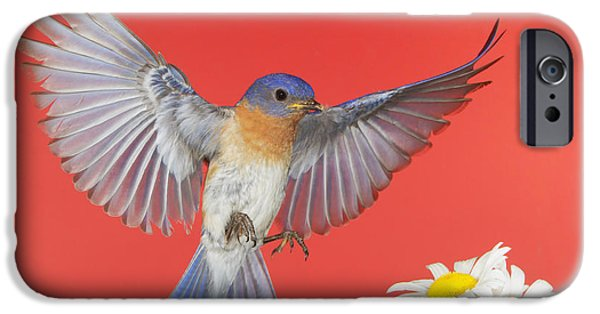 July 4th iPhone Cases - Red White And Bluebird Forever iPhone Case by Gerry Sibell