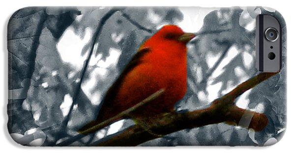 Four Animal Faces iPhone Cases - Red Wild Bird iPhone Case by Debra     Vatalaro
