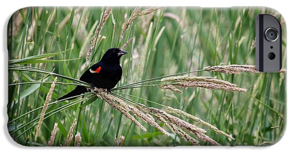 Animals Photographs iPhone Cases - Red-winged Blackbird iPhone Case by LeAnne Perry
