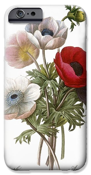 1833 Photographs iPhone Cases - Redoute: Anemone, 1833 iPhone Case by Granger