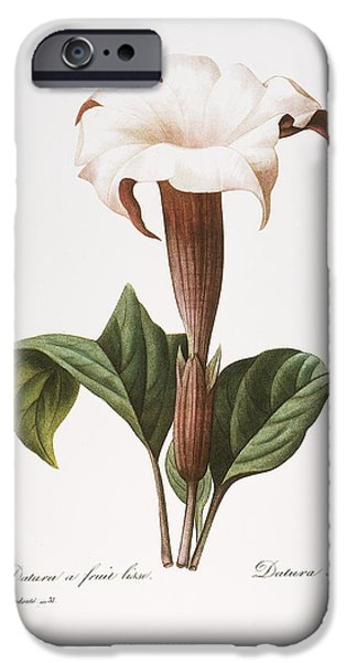 1833 Photographs iPhone Cases - Redoute: Datura, 1833 iPhone Case by Granger