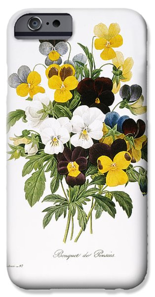 1833 Photographs iPhone Cases - Redoute: Pansy, 1833 iPhone Case by Granger