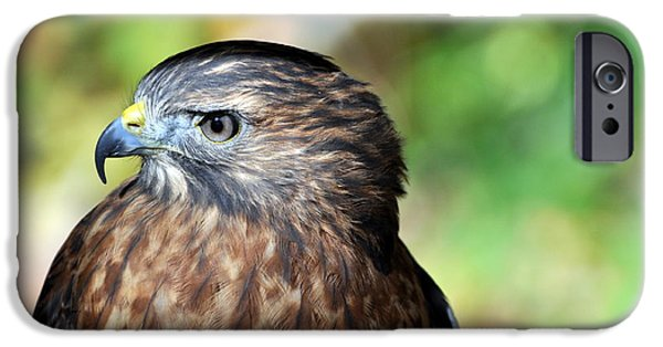 Redtail Hawk iPhone Cases - Redtail iPhone Case by Marty Koch