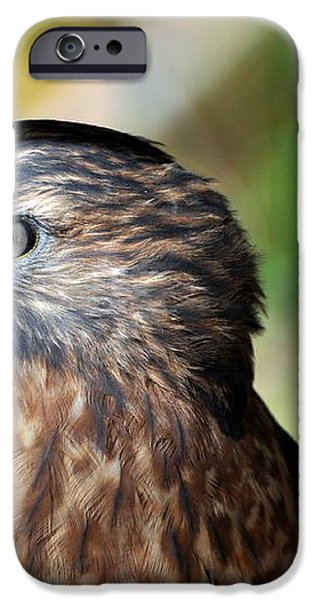 Redtail iPhone Case by Marty Koch