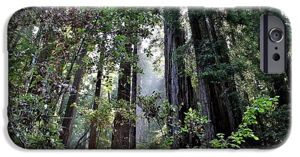 San Francisco Cali iPhone Cases - Redwood Beauty iPhone Case by Allison Liffman