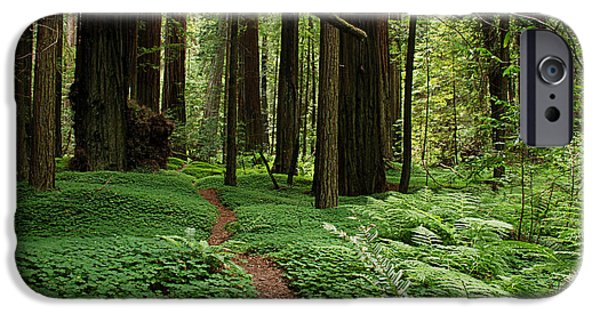 Fauna iPhone Cases - Redwood Forest Path iPhone Case by Melany Sarafis