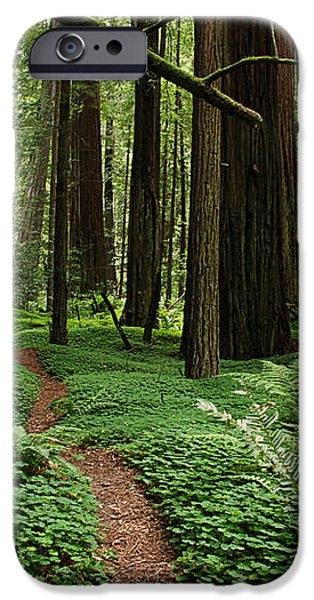 Redwood Forest Path iPhone Case by Melany Sarafis