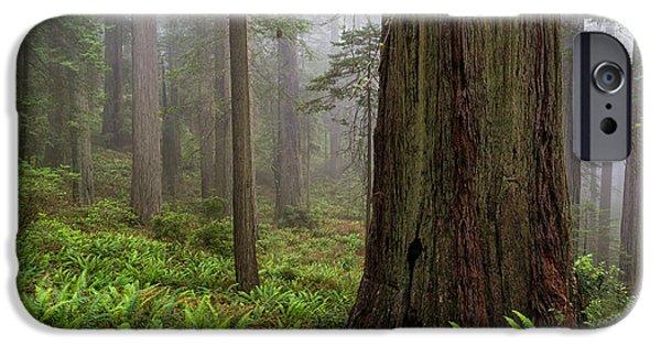 Mist iPhone Cases - Redwood Textures iPhone Case by Scott Warner