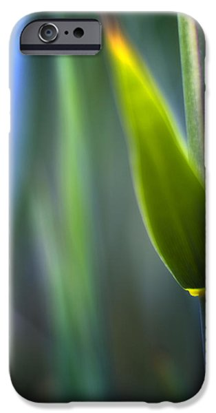 Decorativ iPhone Cases - Reed iPhone Case by Silke Magino