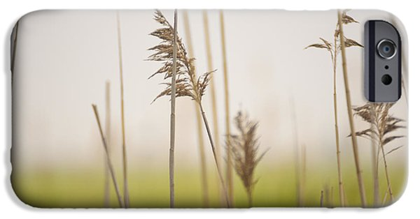 United iPhone Cases - Reeds in the Mist III iPhone Case by Marianne Campolongo