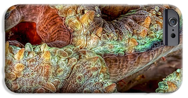 Marine iPhone Cases - Reef Art - Stony Coral iPhone Case by Henry Jager