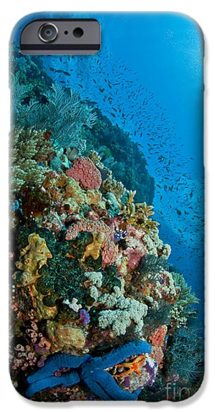 Reef Scene With Corals And Fish iPhone Case by Mathieu Meur