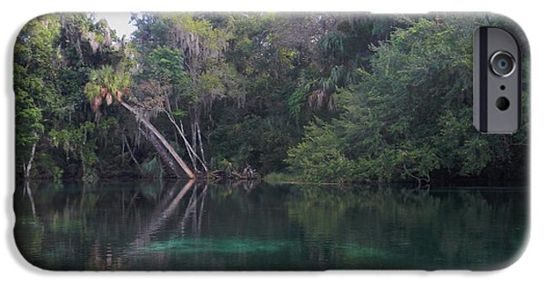 River iPhone Cases - Reflecting Palms iPhone Case by Warren Thompson
