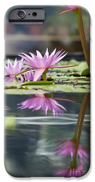 Aquatic Plants iPhone Cases - Reflecting Waterlily  iPhone Case by Tim Gainey