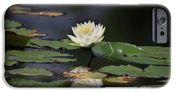 Lilly Pads iPhone Cases - Reflective Lilly iPhone Case by Deborah Benoit
