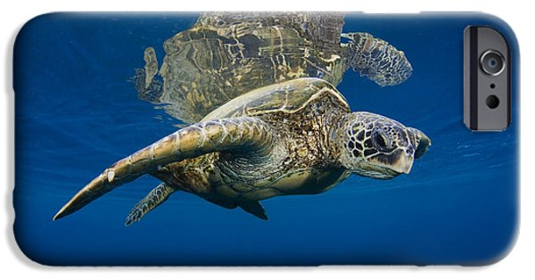 Animal Wisdom iPhone Cases - Reflective Turtle 1 iPhone Case by Dave Fleetham - Printscapes