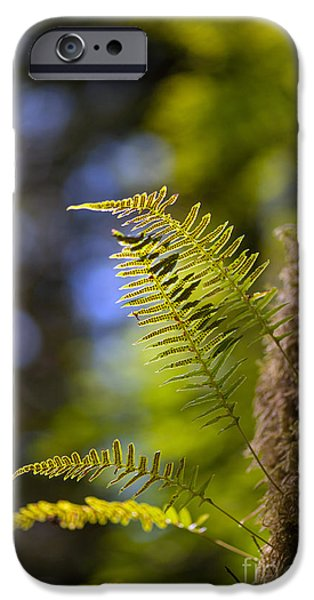 Forest Detail iPhone Cases - Renewal Ferns iPhone Case by Mike Reid