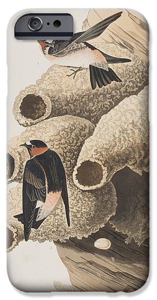 Swallow iPhone Cases - Republican or Cliff Swallow iPhone Case by John James Audubon