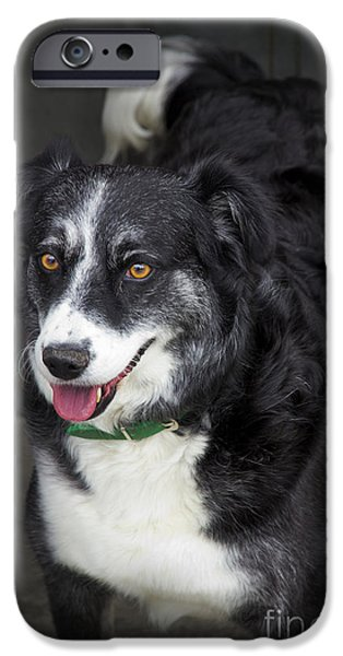 Stray iPhone Cases - Rescue Dog iPhone Case by Al Bourassa
