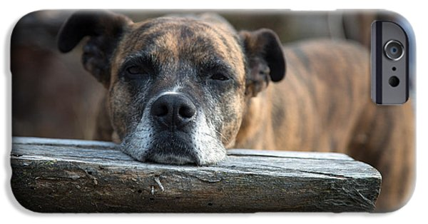 Dogs iPhone Cases - Restful Roxy iPhone Case by MaJoR  Images