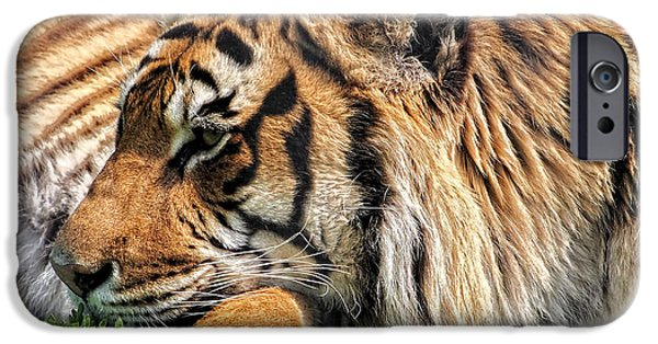 Stripes iPhone Cases - Resting Bengal Tiger iPhone Case by Scott Olsen