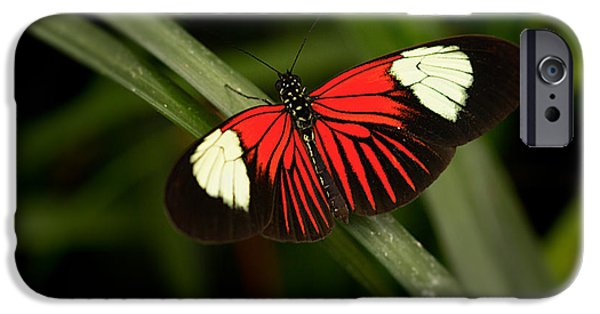 Transformation iPhone Cases - Resting Butterfly iPhone Case by Ana V  Ramirez