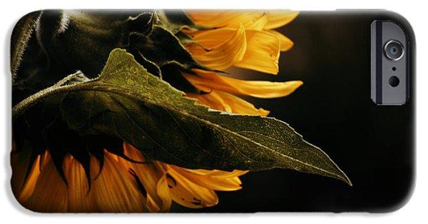 Snake Glass Art iPhone Cases - Reticent Sunflower iPhone Case by Douglas MooreZart
