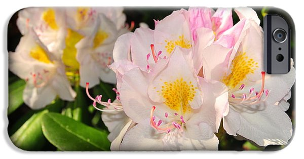 Catherine Reusch Daley iPhone Cases - Rhododendron iPhone Case by Catherine Reusch  Daley