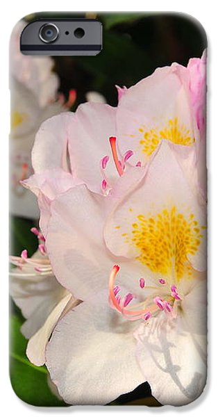 Rhododendron iPhone Case by Catherine Reusch  Daley