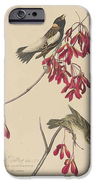 Bunting iPhone Cases - Rice Bunting iPhone Case by John James Audubon