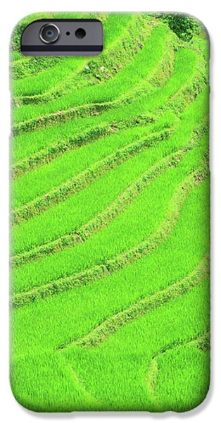 Rice field terraces iPhone Case by MotHaiBaPhoto Prints