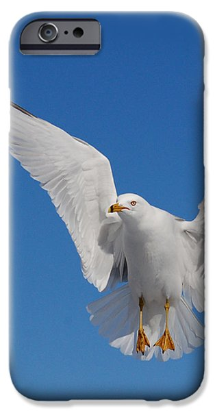 Ring billed gull in flight iPhone Case by Mircea Costina Photography