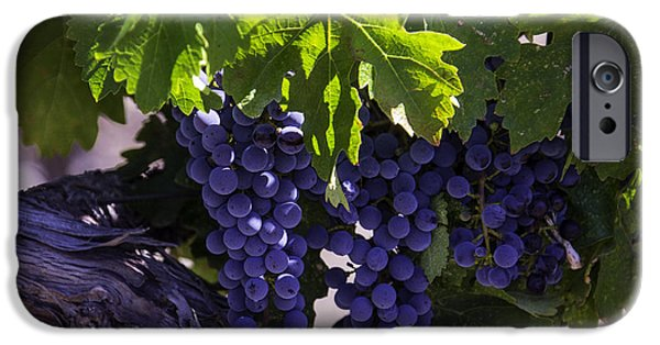 Crops iPhone Cases - Ripe Grapes iPhone Case by Garry Gay