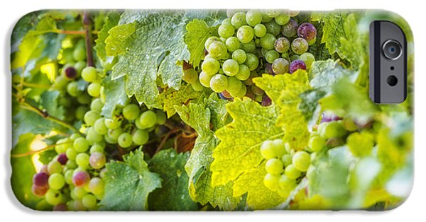 Crops iPhone Cases - Ripening Grapes iPhone Case by Marianne Campolongo
