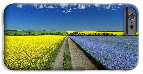 Canola Field iPhone Cases - Road Through Flowering Flax And Canola iPhone Case by Dave Reede