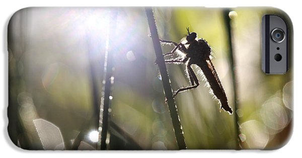 Morning iPhone Cases - Robber fly iPhone Case by Jana Behr