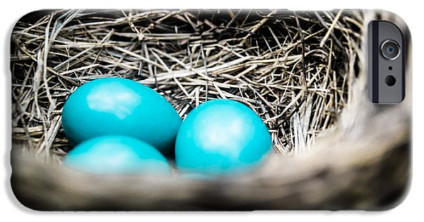 Nest iPhone Cases - Robins Eggs iPhone Case by Shelby  Young