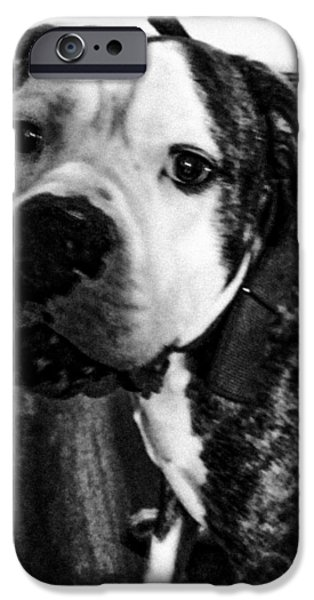 Black Dog iPhone Cases - Rocky BW iPhone Case by Melissa Coffield