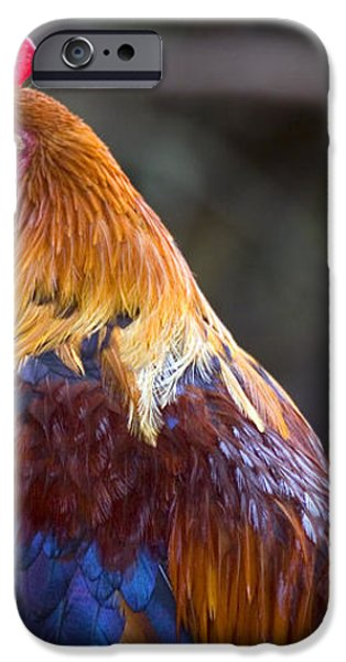 Rooster Rooster iPhone Case by Mike  Dawson