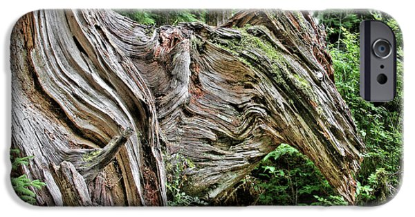 Tree Roots iPhone Cases - Roots - Welcome to Olympic National Park WA USA iPhone Case by Christine Till