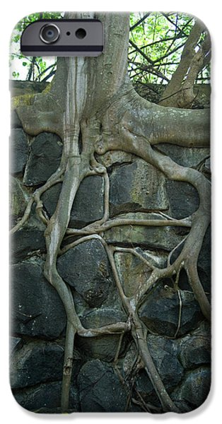 Roots and Rocks iPhone Case by Douglas Barnett