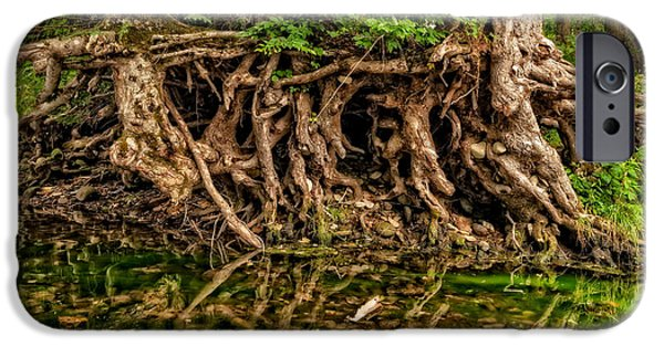 Tree Roots iPhone Cases - Roots iPhone Case by Christopher Holmes